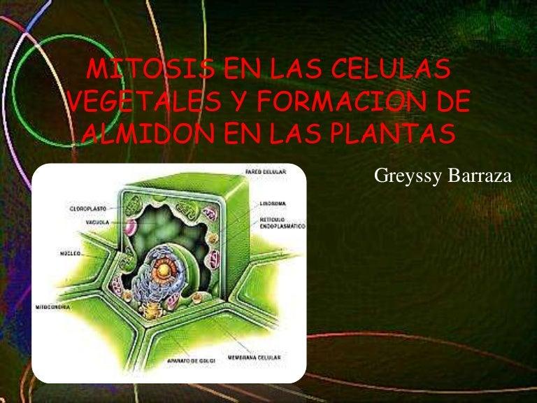 Mitosis en las celulas vegetales y formacion de