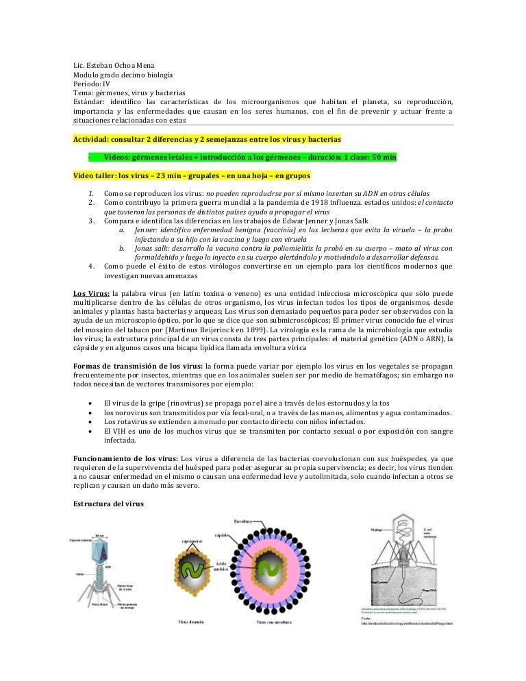 bacterias 4 ejemplos