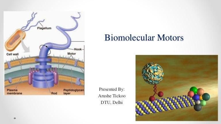 Bio Molecular Motors