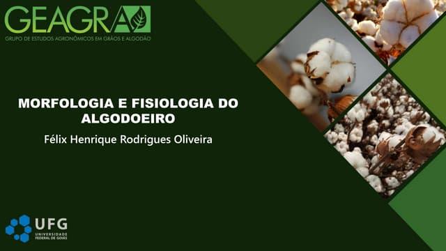 Morfologia e fisiologia algodão