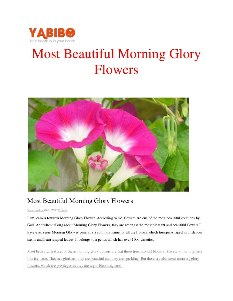 most beautiful morning glory flowerspdf, Beautiful flower