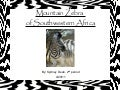 Mountain Zebra of Southwestern Africa, Sydney Dean, 2nd Period
