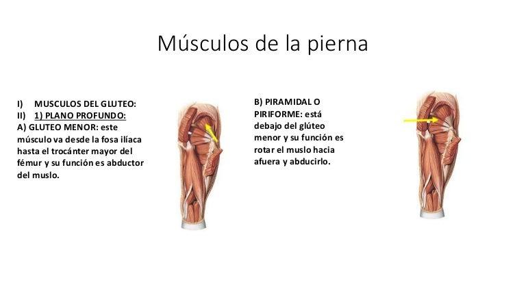 Músculos De La Piernainervación Y Articulaciones Del Pie