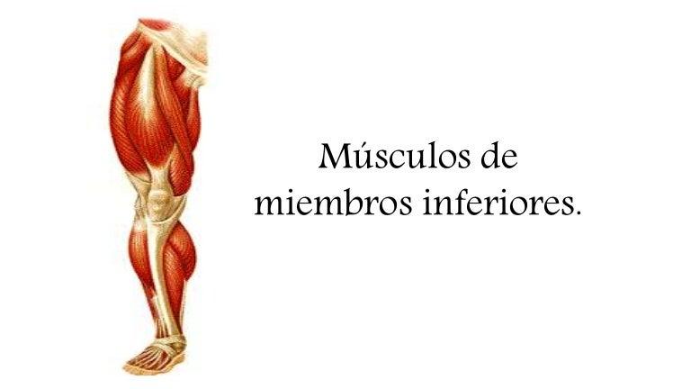 Músculos miembro inferior