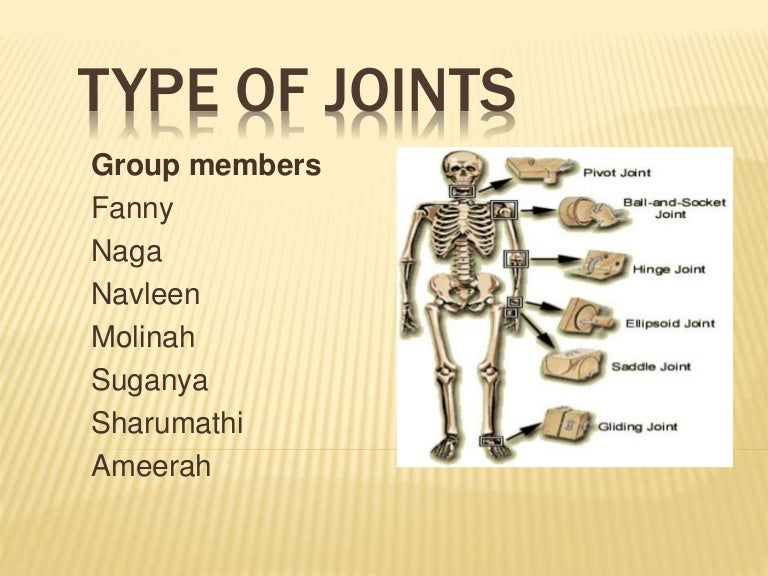 Anatomy Physiology Of Joint