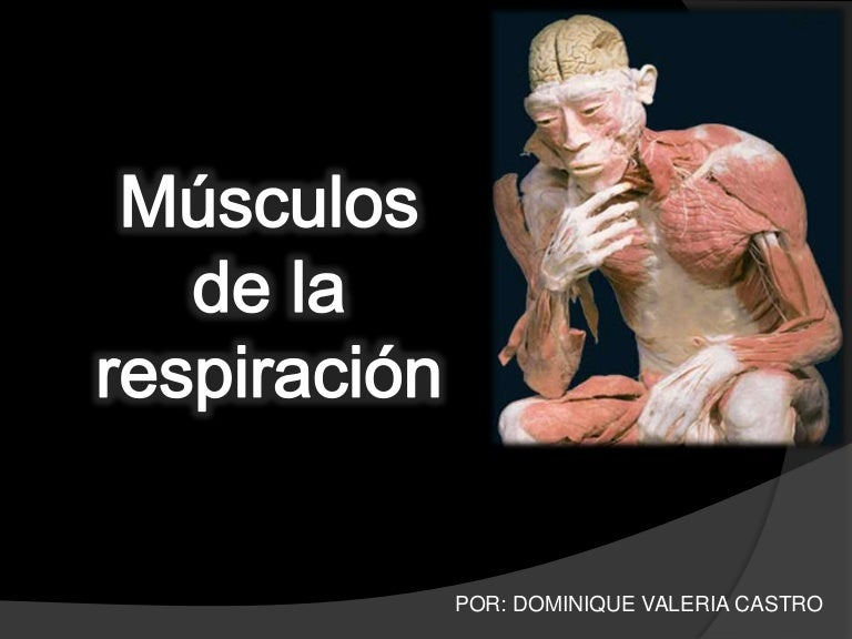 musculosdelarespiracion-140320230641-phpapp01-thumbnail-4.jpg?cb=1395356890