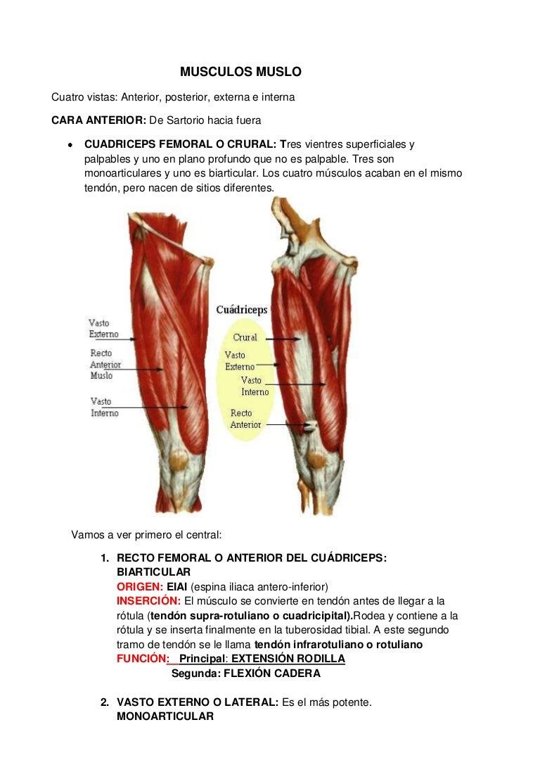 tendon del biceps crural inflamado