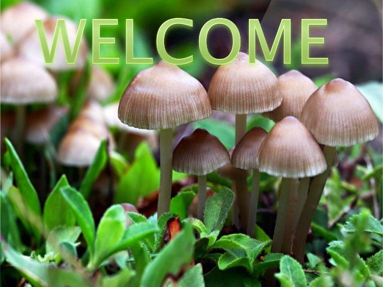 Mushroom cultivation toneelgroepblik Image collections