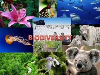 PPT OF BIODIVERSITY