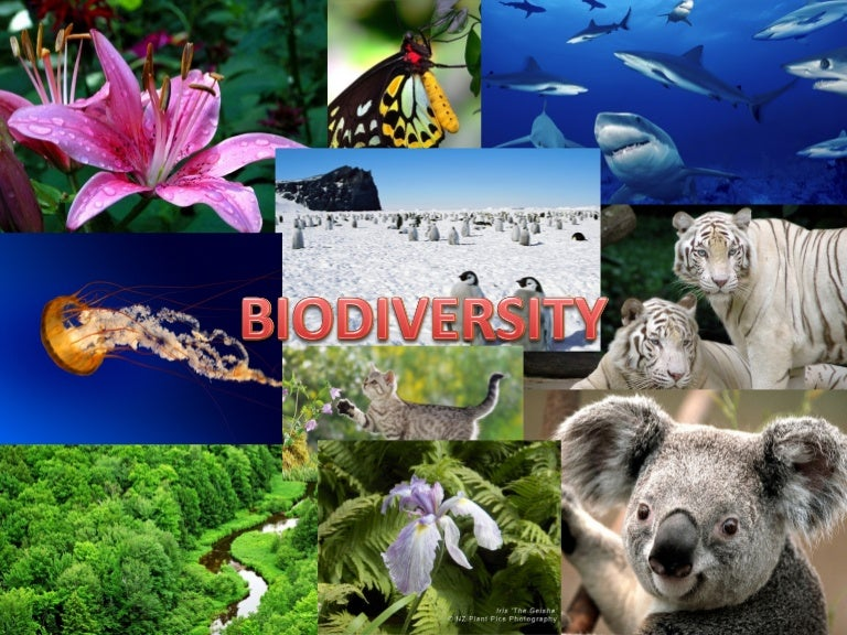 biodiversity essay topics ged essay questions grant submission  ppt of biodiversity