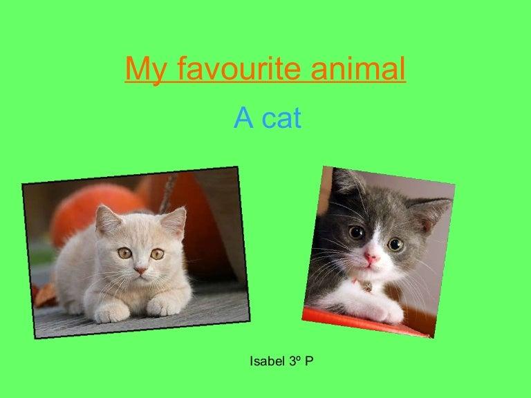My Pet Animal Cat Paragraph