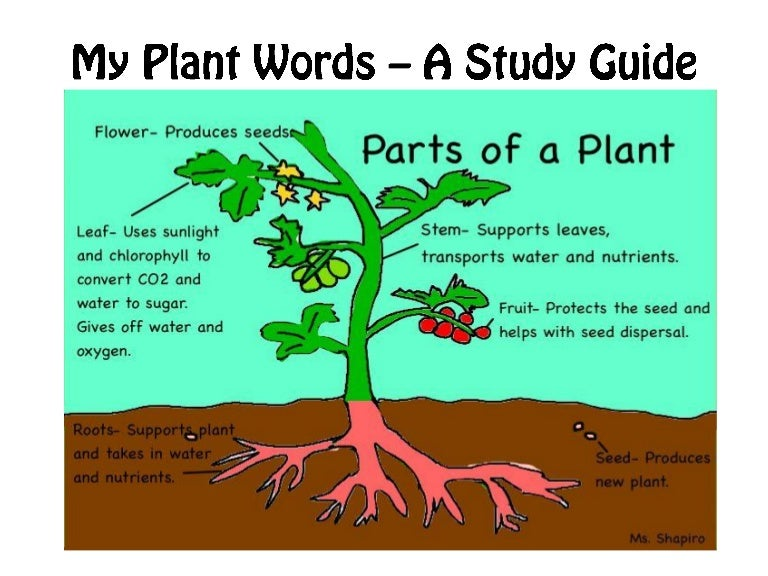 plant diversity study guide essay To motivate and guide student observation of animal and plant similarities, diversity, and appropriateness to live in different environments to show that stories sometimes give plants and animals attributes that they don't really have this lesson exposes children to a wide range of animals and.