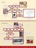 Native American Family Tree