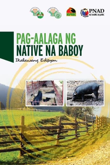 Pag-aalaga ng Native na Baboy