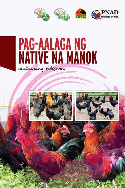 Pag-aalaga ng Native na Manok