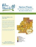 Native Plants for Raingardens and Shoreline Stablization