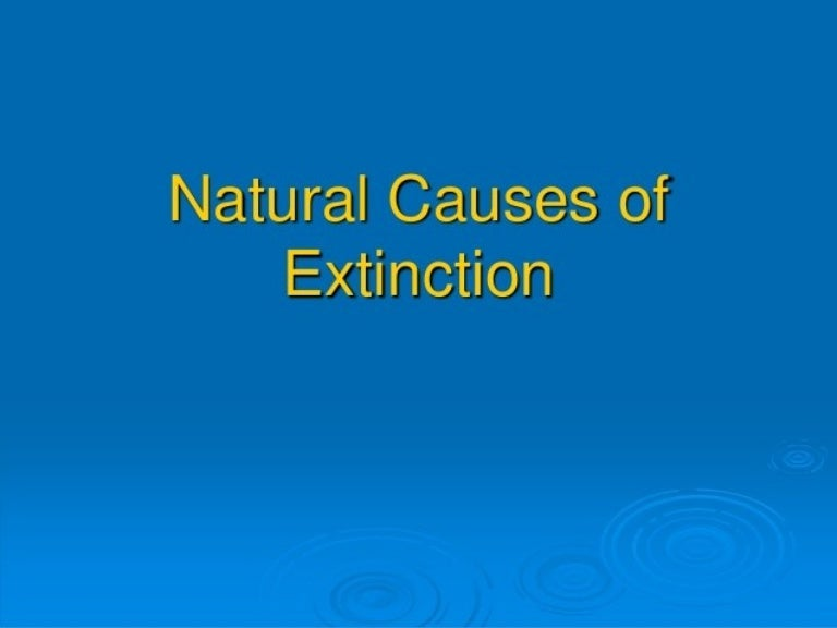 4 main causes of extinction