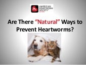 Can heartworms be prevented naturally?