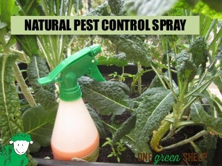 Quick and Easy Natural Pest Control Spray