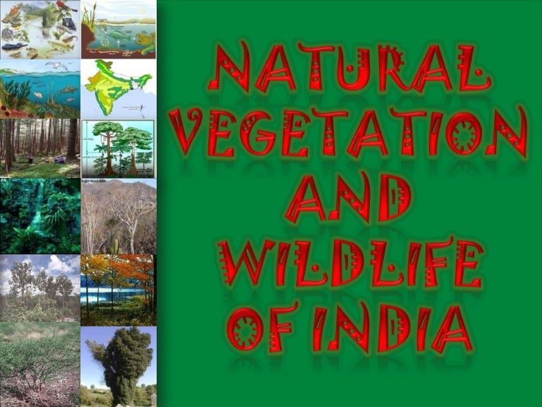 information about natural vegetation and wildlife