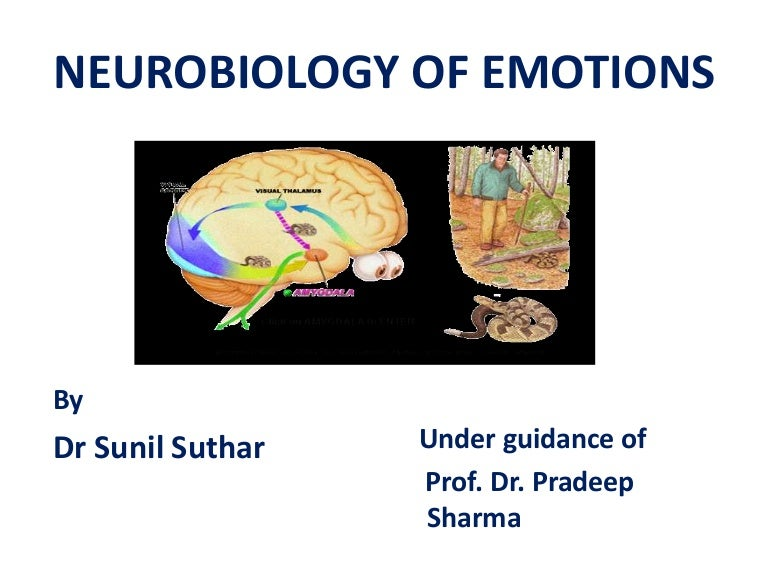 Brain Circuits For Successful Emotional >> Neurobiology Of Emotion