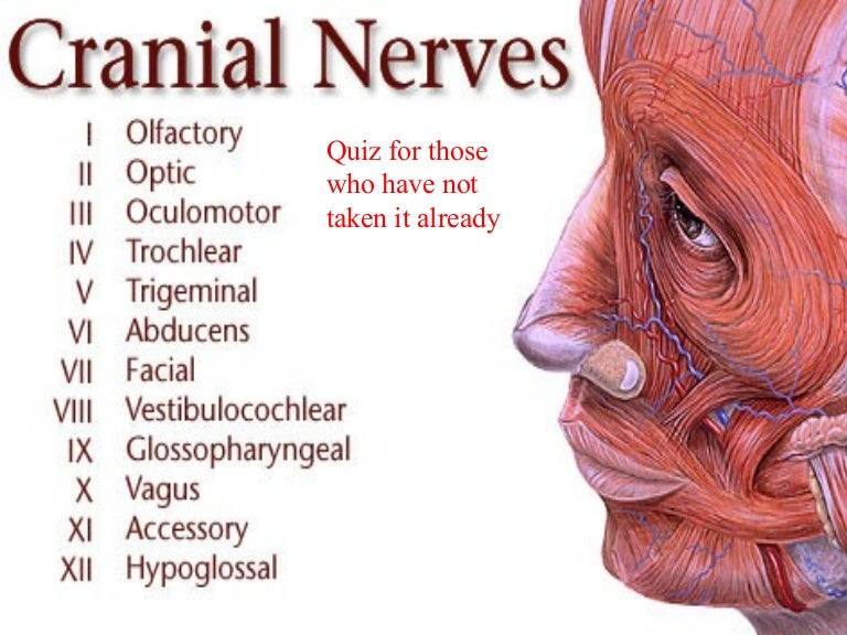 Neurology Ppt Presentation Nerves Location Innervation Myotmes De