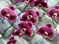Nice Orchids For You..