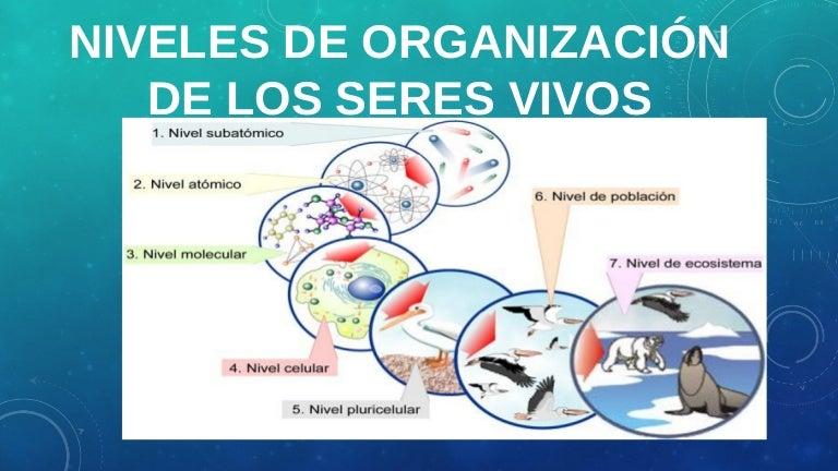 Niveles De Organización De Los Seres Vivos Lic Javier Cucaita