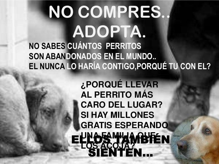 Mensaje Para Reflexionarno Más Crueldad En Los Animales