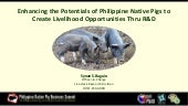 R&D initiatives on Philippine Native Pigs