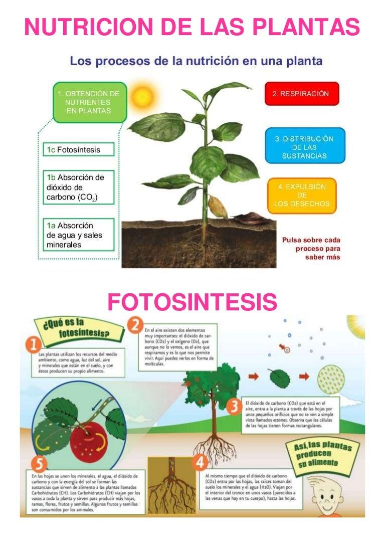 Nutricion de las plantas for Incompatibilidad en plantas
