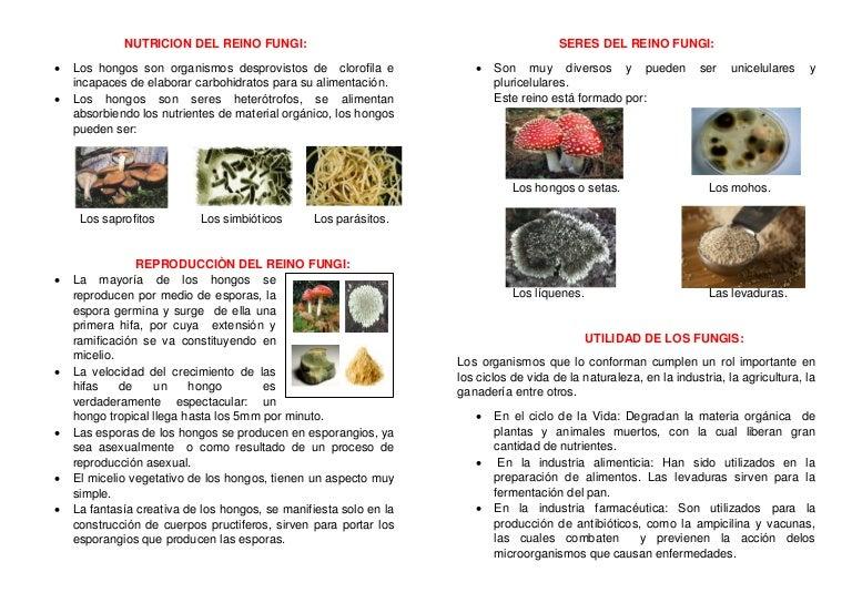 Nutricion Del Reino Fungi