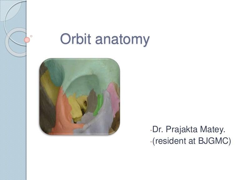 Orbit anatomy