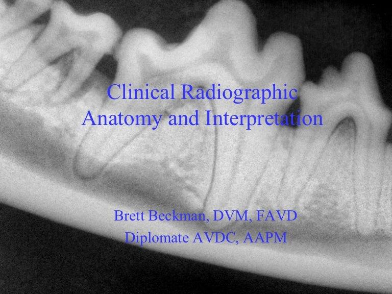 Veterinary Dental Radiographic Interpretation Quiz