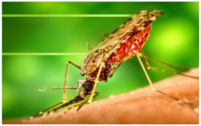 Paglikay sa dengue prevention toneelgroepblik Choice Image