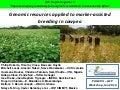 PAG XXII 2014 – Genomic resources applied to marker-assisted breeding in cowpeas – BL Huynh