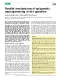 Parallel mechanisms of epigenetic reprogramming in the germline