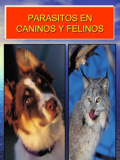 Parasito Caninos Y Felinos
