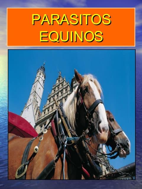 Parasitos Equinos