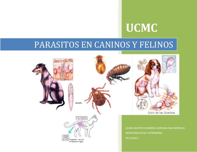 parasitos más comunes en gatos