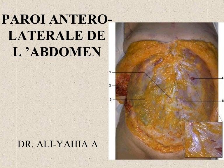 paroi abdominale ligne blanche