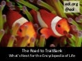 The Road to TraitBank: What's Next for the Encyclopedia of Life
