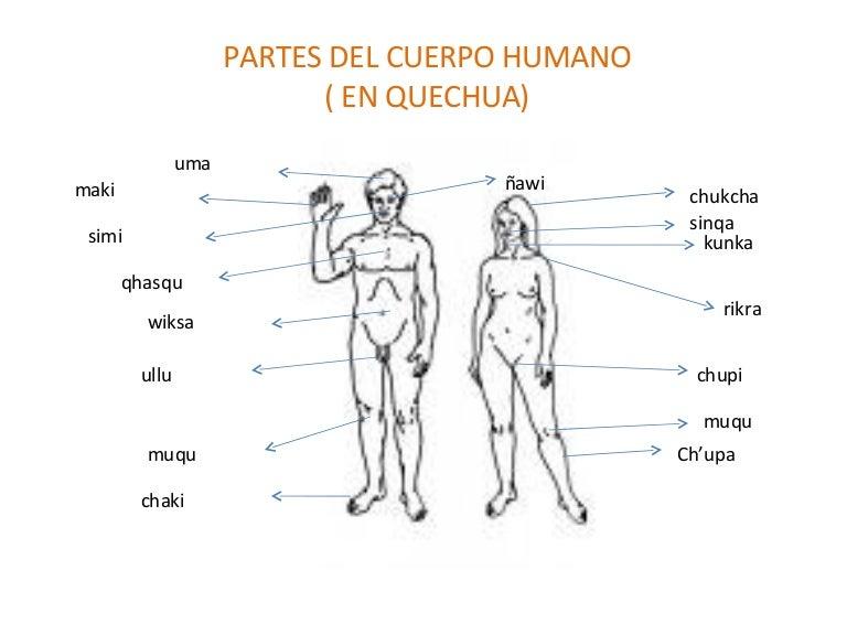 Partes Internas Del Cuerpo Humano