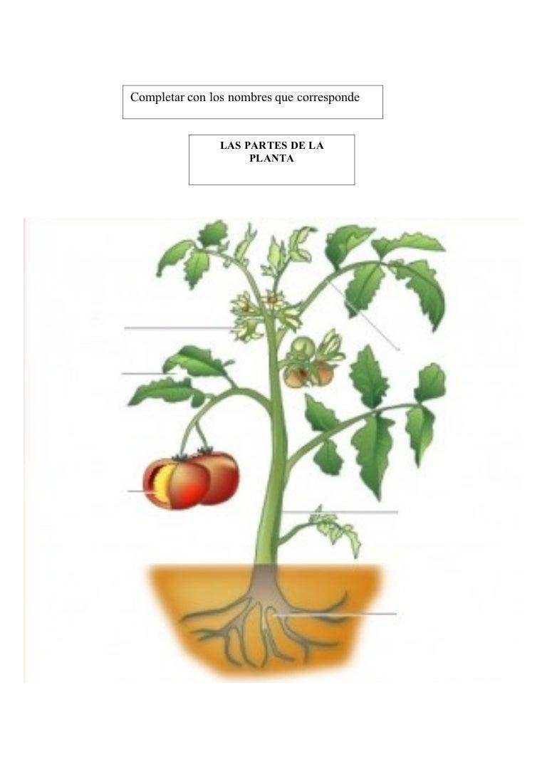 Partes de la planta for Arboles con sus nombres y caracteristicas