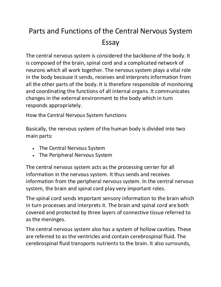 Parts And Functions Of The Central Nervous System Essay