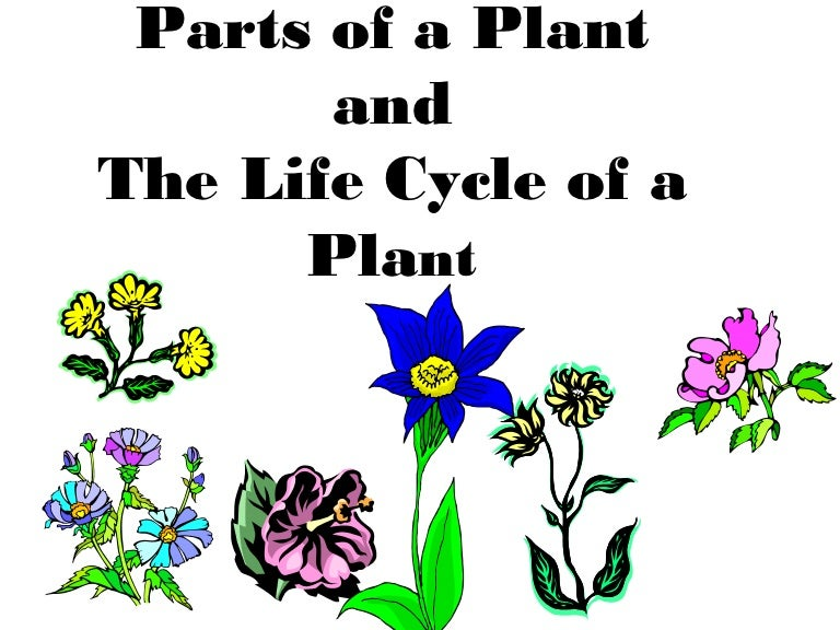 Parts Of A Plantplant Life Cycle Teach