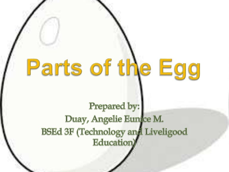 PARTS OF EGG