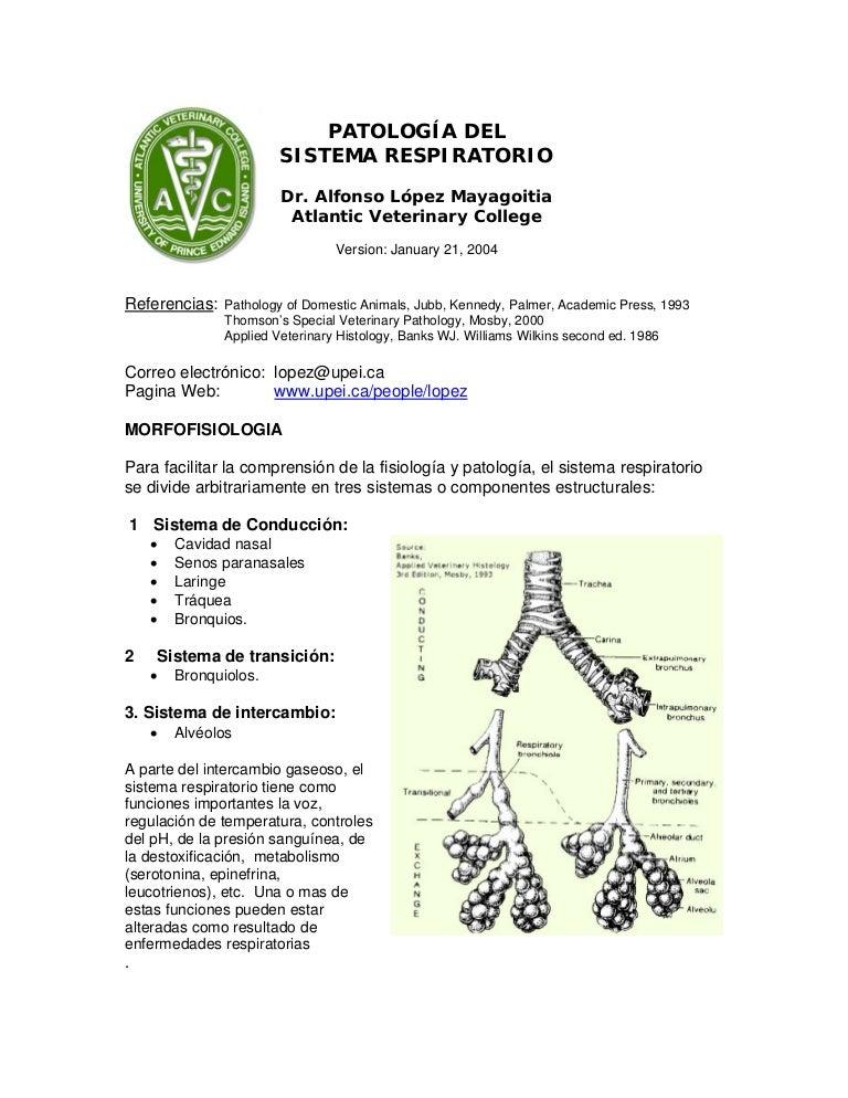 Patología del sistema respiratorio