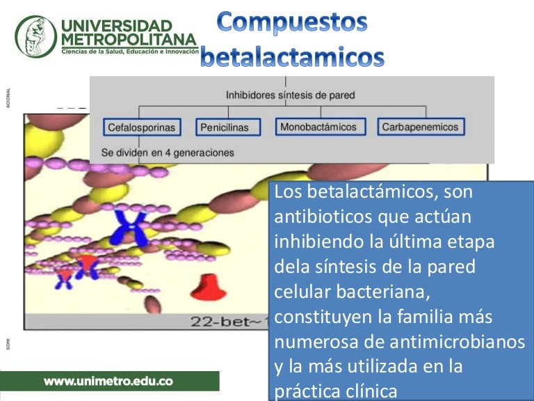 tratamiento de la terapia de prostatitis por enterococcus faecalis