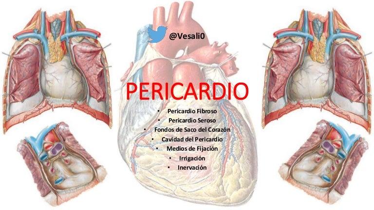 Anatomía del Pericardio